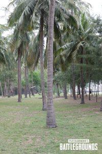 Árvore que foi digitalizada